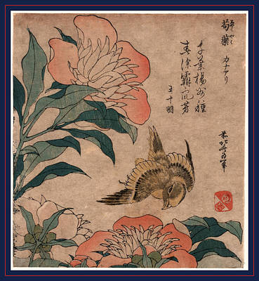 1833 Drawing - Shakuyaku Kana Ari, Peony And Canary. 1833 Or 1834 by Hokusai, Katsushika (1760-1849), Japanese