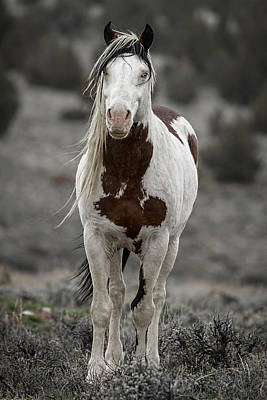 Forelock Photograph - Shaman by Wes and Dotty Weber