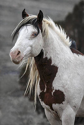 Forelock Photograph - Shaman Portrait D4290 by Wes and Dotty Weber