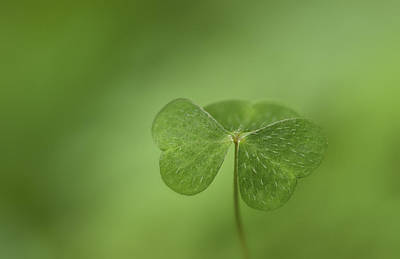 Photograph - Shamrock by Perry Wunderlich