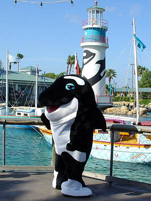 Photograph - Shamu by David Nicholls