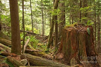 Photograph - Shannon Falls Rainforest by Adam Jewell