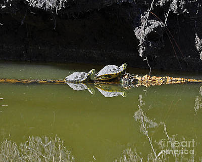 Pond Turtle Photograph - Sharing Sliders by Al Powell Photography USA