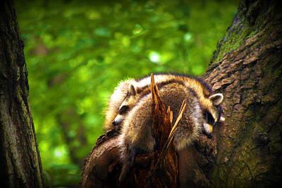 Wildlife Photograph - Sharing Sweet Dreams by Aurelio Zucco