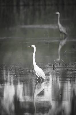 Photograph - Sharing The Pond by Eric Miller