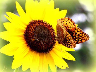 Photograph - Sharing The Sunflower by Kim Galluzzo Wozniak