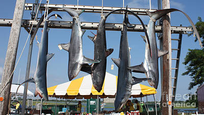 Photograph - Shark Gallows by John Telfer