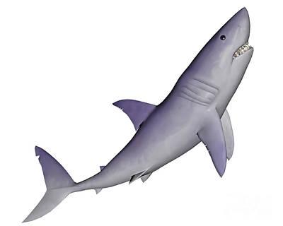 Aquatic Digital Art - Shark Illustration, White Background by Elena Duvernay