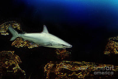 Digital Art - Shark In The Shadows by E B Schmidt