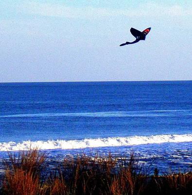 Photograph - Shark Kite Flying by Pamela Hyde Wilson
