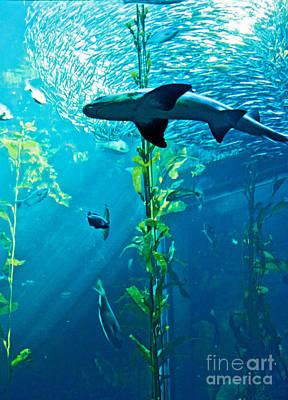 Monterey Bay Aquarium Photograph - Shark by Micah May