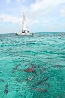 Photograph - Shark N Sail I by Kristina Deane
