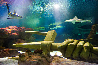 Photograph - Shark Tank Trident by Bill Pevlor