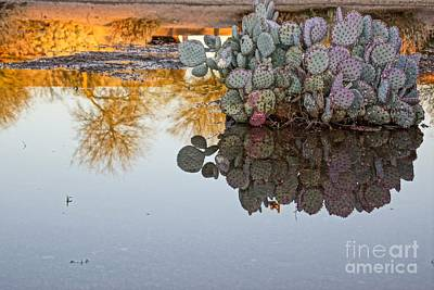 Photograph - Sharp Reflection by Kerri Mortenson