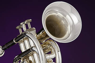 Photograph - Sharp Silver Trumpet by M K Miller