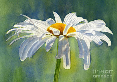 White Daisy Painting - Shasta Daisy Blossom With Blue Background by Sharon Freeman