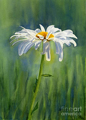 White Daisy Painting - Shasta Daisy Flower With Blue Green Background by Sharon Freeman