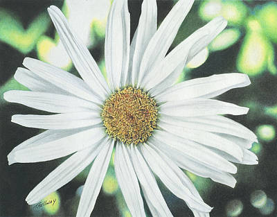 Drawing - Shasta Daisy by Terry Mellway