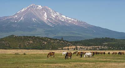 Mt. Shasta Photograph - Shasta Horses by Loree Johnson