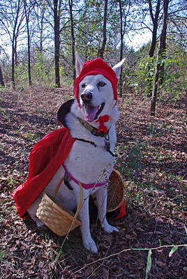 Photograph - Shasta Little Red Riding Wolf by Robyn Stacey