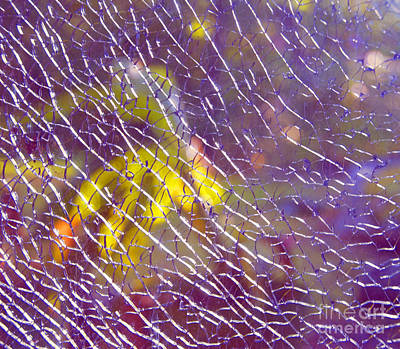 Photograph - Shattered Glass Abstract by Cindy Lee Longhini