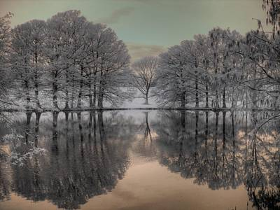 Shaw Nature Reserve Art Print by Jane Linders