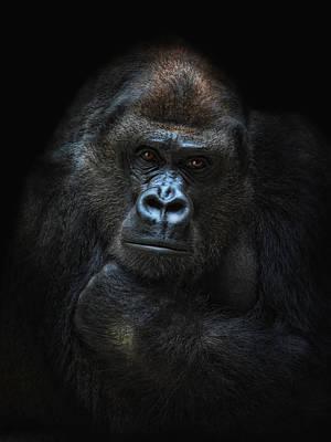 Gorilla Photograph - She-gorilla by Joachim G Pinkawa