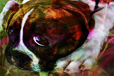 Photograph - She Loves The Garden - Dog by Marie Jamieson