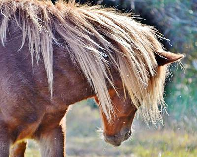 Photograph - She Tossed Her Mane - Wild Pony Of Assateague by Kim Bemis