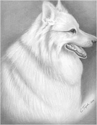 Drawing - Sheba by Lawrence Tripoli