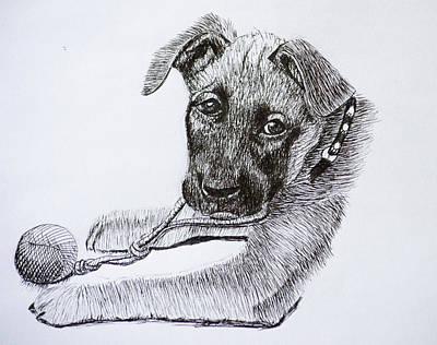 Drawing - Sheba by Wade Clark