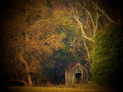Shed And Trees Art Print by Joyce Kimble Smith