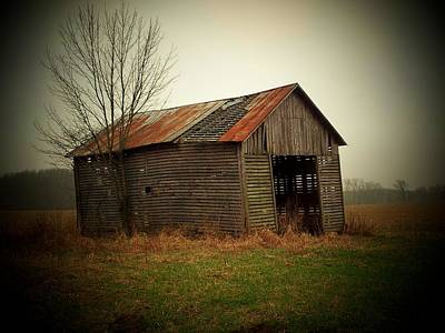 Shed In Pasture Art Print