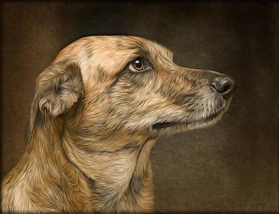 Sheeba Art Print by Hazel Billingsley