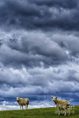 Leaden Sky Photograph - Sheep A Leaden Sky by Thomas R Fletcher