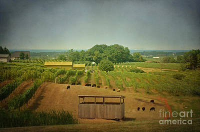 Art Print featuring the photograph Sheep Among The Vineyards by Maria Janicki