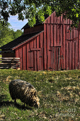 Photograph - Sheep And Barn by Crystal Nederman