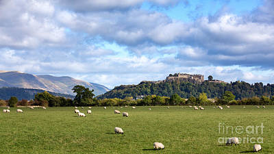 Stone Buildings Photograph - Sheep And Stirling Castle by Jane Rix
