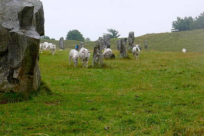 Photograph - Sheep And Stones At Avebury by Denise Mazzocco