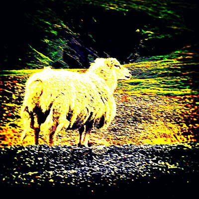 Belong Dead Photograph - Don't You Look At Me With That Sheep Attitude  by Hilde Widerberg