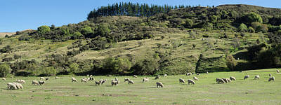 Pasture Scenes Photograph - Sheep Grazing In Pasture Along Cardona by Panoramic Images