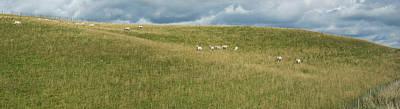 Sheep Grazing On Hillside, Taihape Art Print by Panoramic Images