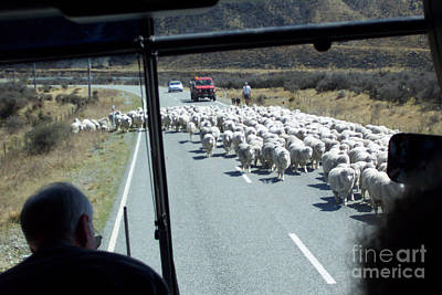Photograph - Sheep Herding by John Potts