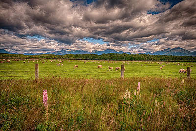 Sheep In Fiordland, Te Anau, New Zealand Art Print by Rona Schwarz