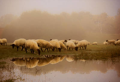Sheep In The Fog Print by Ian Hufton