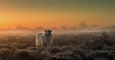 Cattle Photograph - Sheep In The Mist by Rijko Ebens