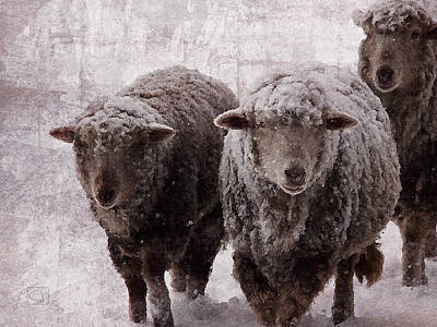 Digital Art - Sheep In Winter by Jean Moore