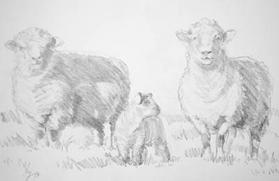 Drawing - Sheep Lamb Drawing by Mike Jory