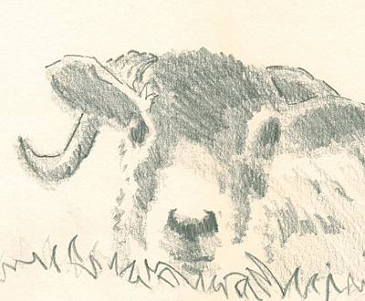 Drawing - Sheep Looking At You by Mike Jory