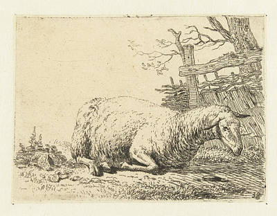 Fence Drawing - Sheep Near A Braided Fence, Print Maker Karel Dujardin by Karel Dujardin
